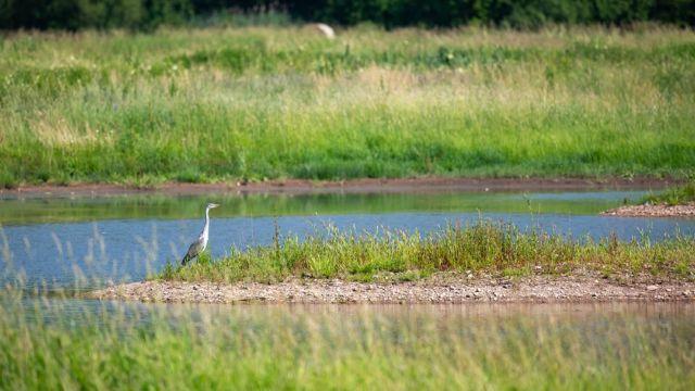 Ptačí park Josefovské louky se dostal do finále soutěže o nejlepší projekt reagující na změnu klimatu Adapterra Awards