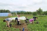 INEX-SDA nabízí dobrovolnické projekty a workcampy u nás i v zahraničí (ekofarma Camphill)