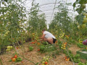 Bio zemědělství v podání neziskové organizace Svobodný statek na soutoku (foto INEX-SDA)